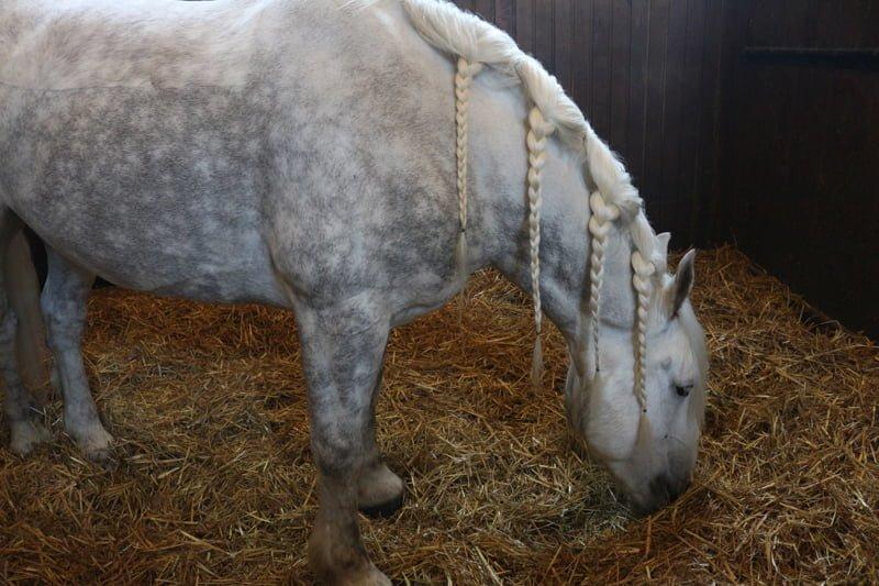 Экспонат Музея лошади, Шантийи