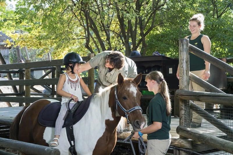 Катание на лошадках в зоопарке, Дворец Шёнбрунн
