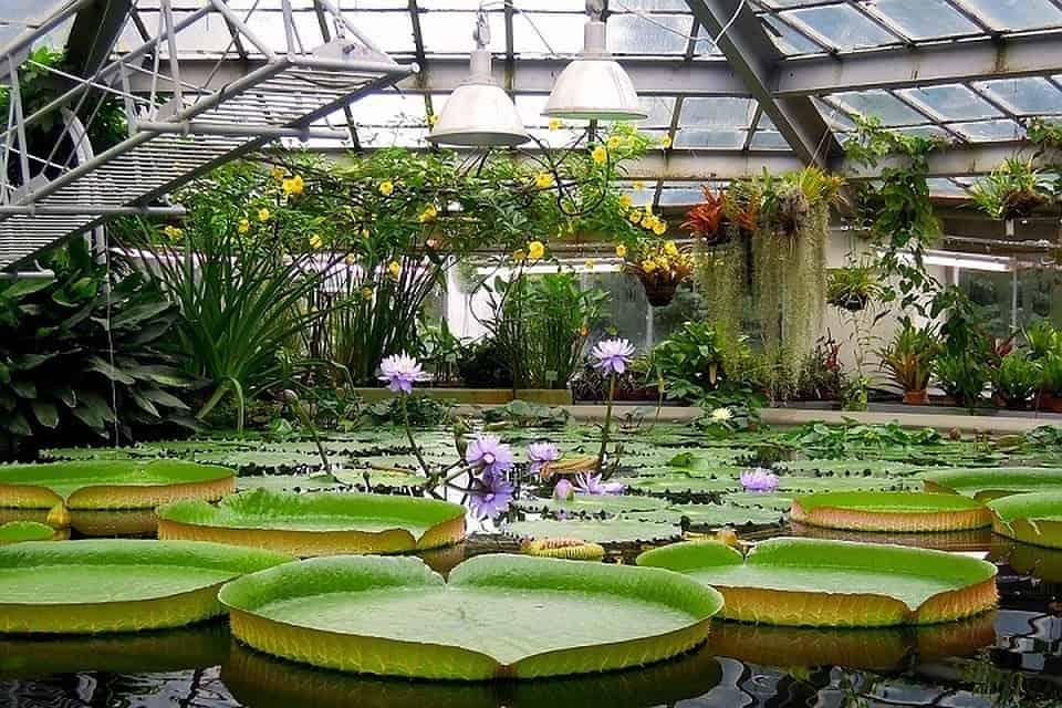 •Центральный ботанический сад НАН Беларуси