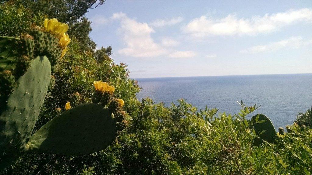 Желтый кактус, Коста Брава