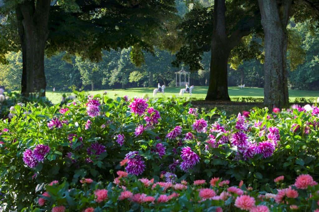 Сад георгинов на Лихтентальской аллее (Dahliengarten), Баден-Баден