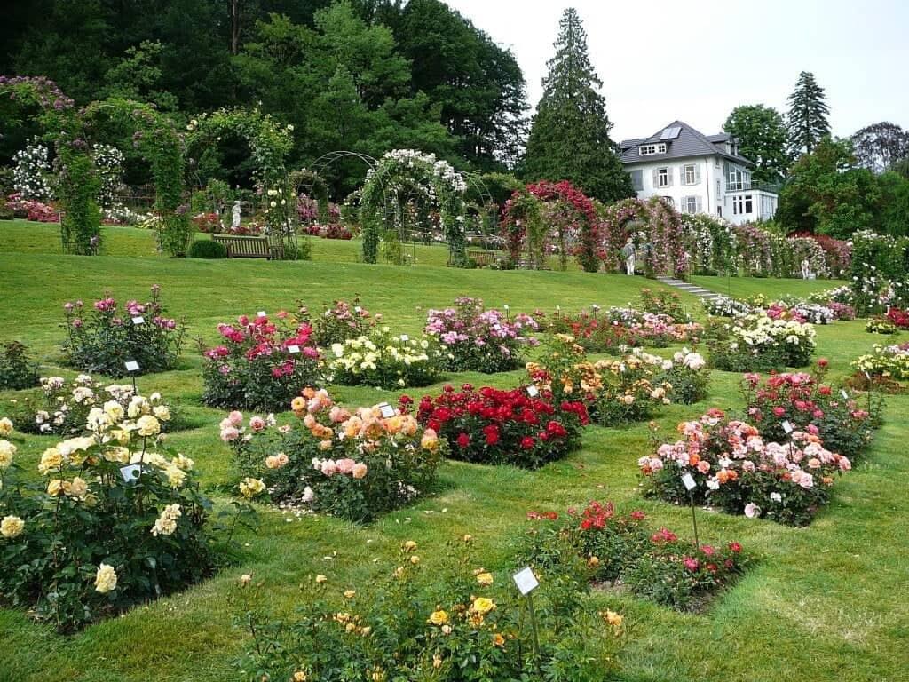 Парк роз Гённеранлаге (Gonneranlage)