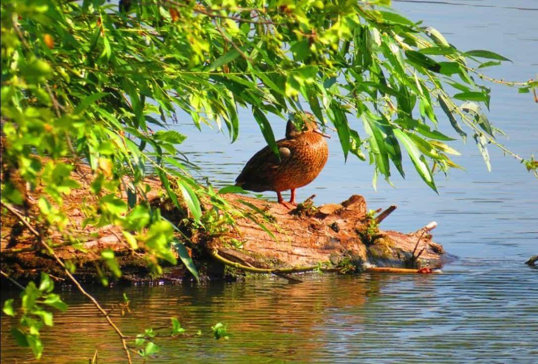 Остров птиц
