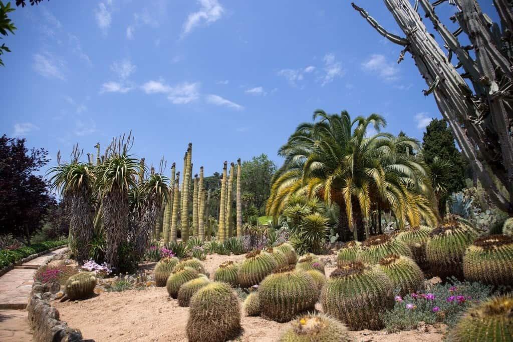 Ботанический сад Пинья де Роса (Pinya de Rosa)