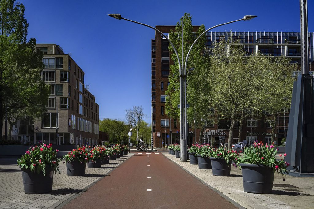Фестиваль тюльпанов в Амстердаме 2021