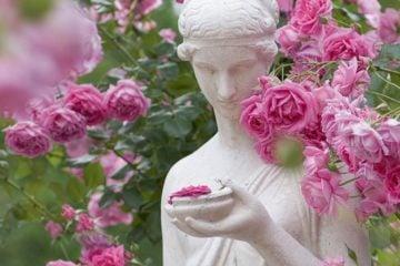 Баден-Баден город роз