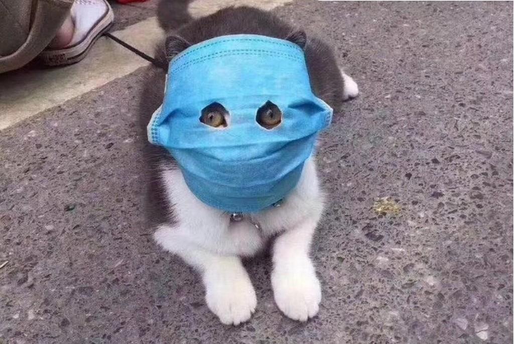 Как правильно носить медицинскую маску Коронавирус