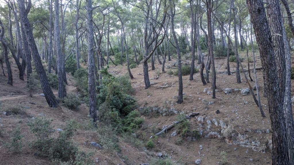 Тропы античного Фаселиса