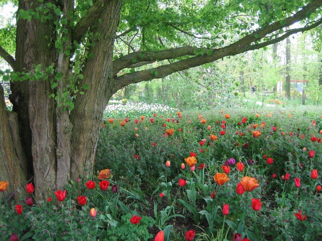 Кёкенхоф - сад цветов