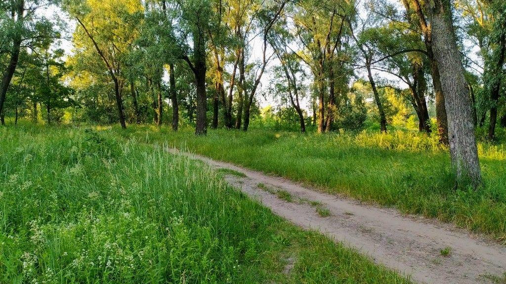 Дорога среди деревьев Оболонского луга