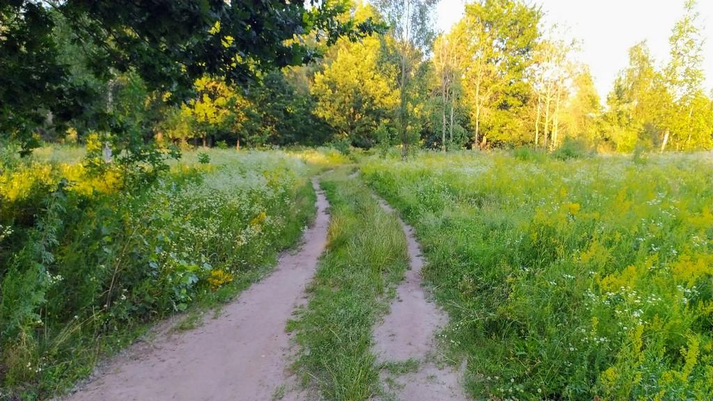 Дорога по цветущему лугу. Красивые места Киева