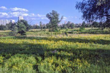 Киев, Оболонский луг