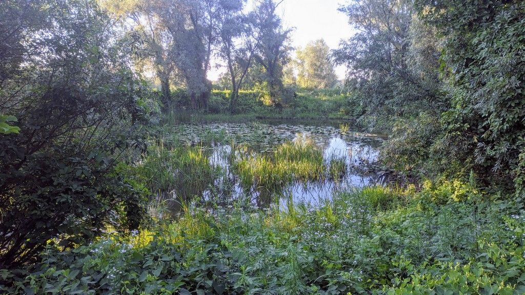 Озеро с кувшинками, Оболонский луг - Киев
