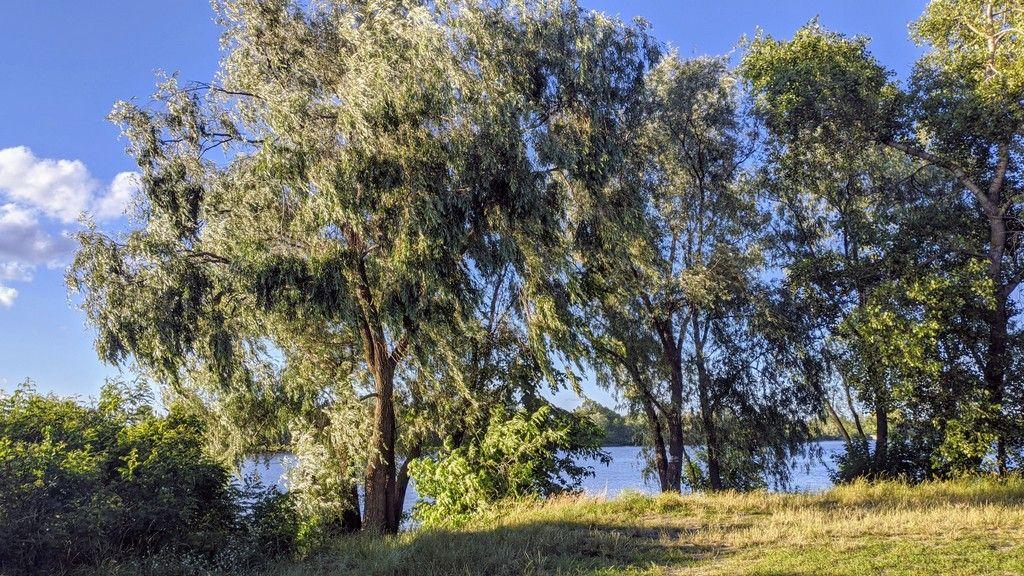 Летний день, залив Верблюд
