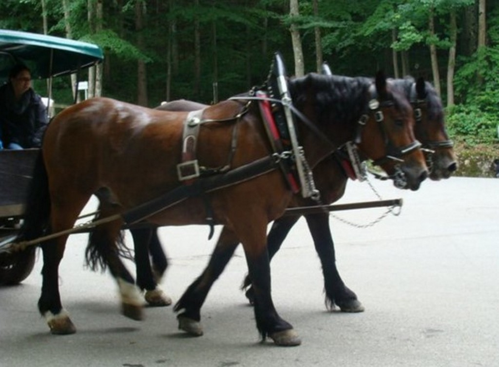 Конным экипажем к замку