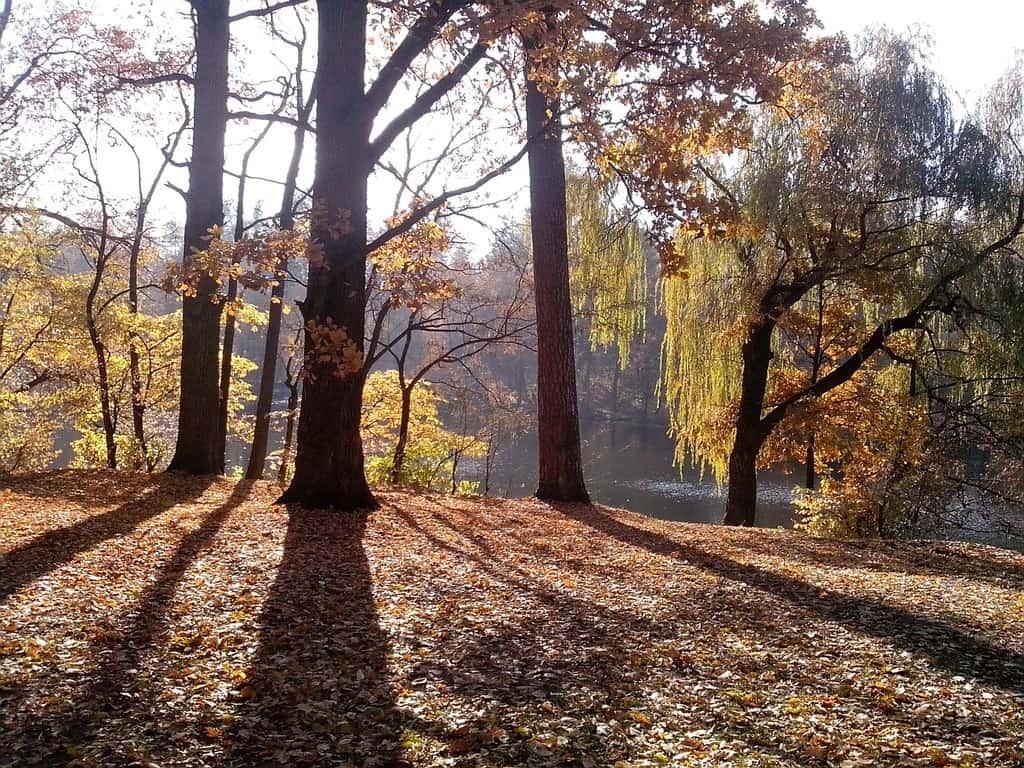 Осень Пуща Водица