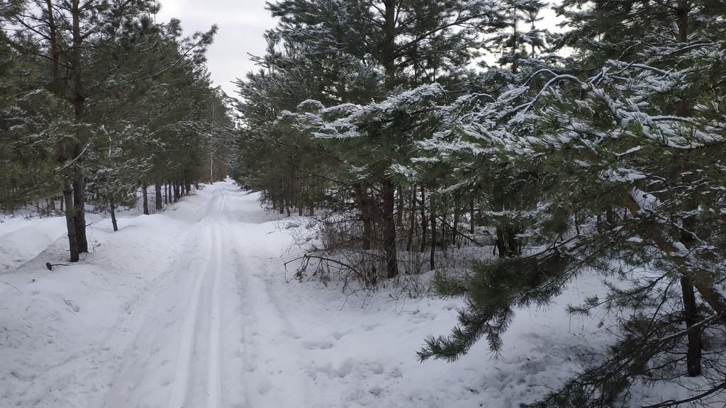 Лыжня Пуща-Водица