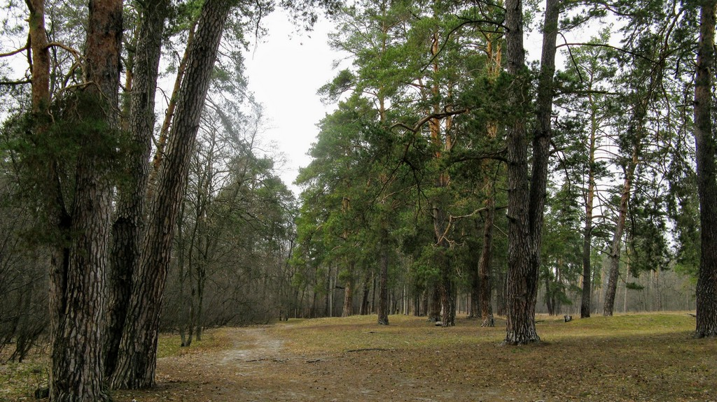 Пуща-Водица пущинский лес