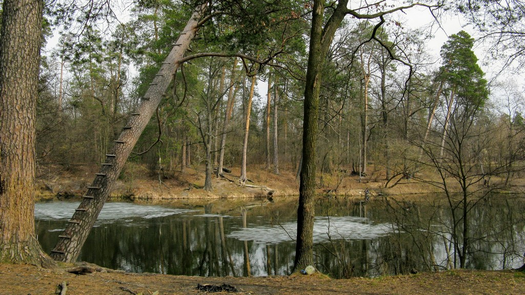 Ранняя весна в Пуще-Водице