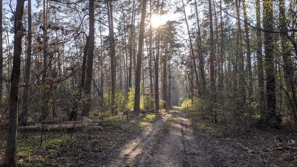 Лесными тропами, пущинский лес