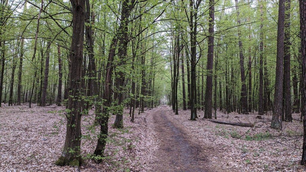 Весенний день в лесу - Пущинский лес, апрель 2020