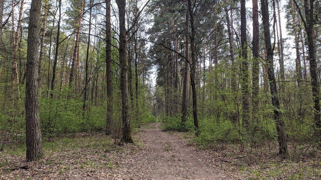 Весна в пущинском лесу 2020