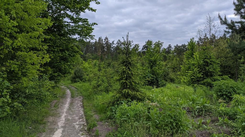 Пущинский лес - Весна 2020 (31.05.2020)