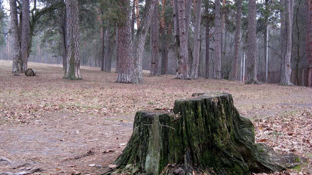 Парк - Пуща-Водица