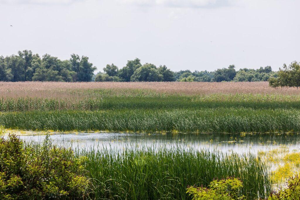Биосферный заповедник мирового значения под защитой ЮНЕСКО. Дельта Дуная славится богатой растительной и животной жизнью.