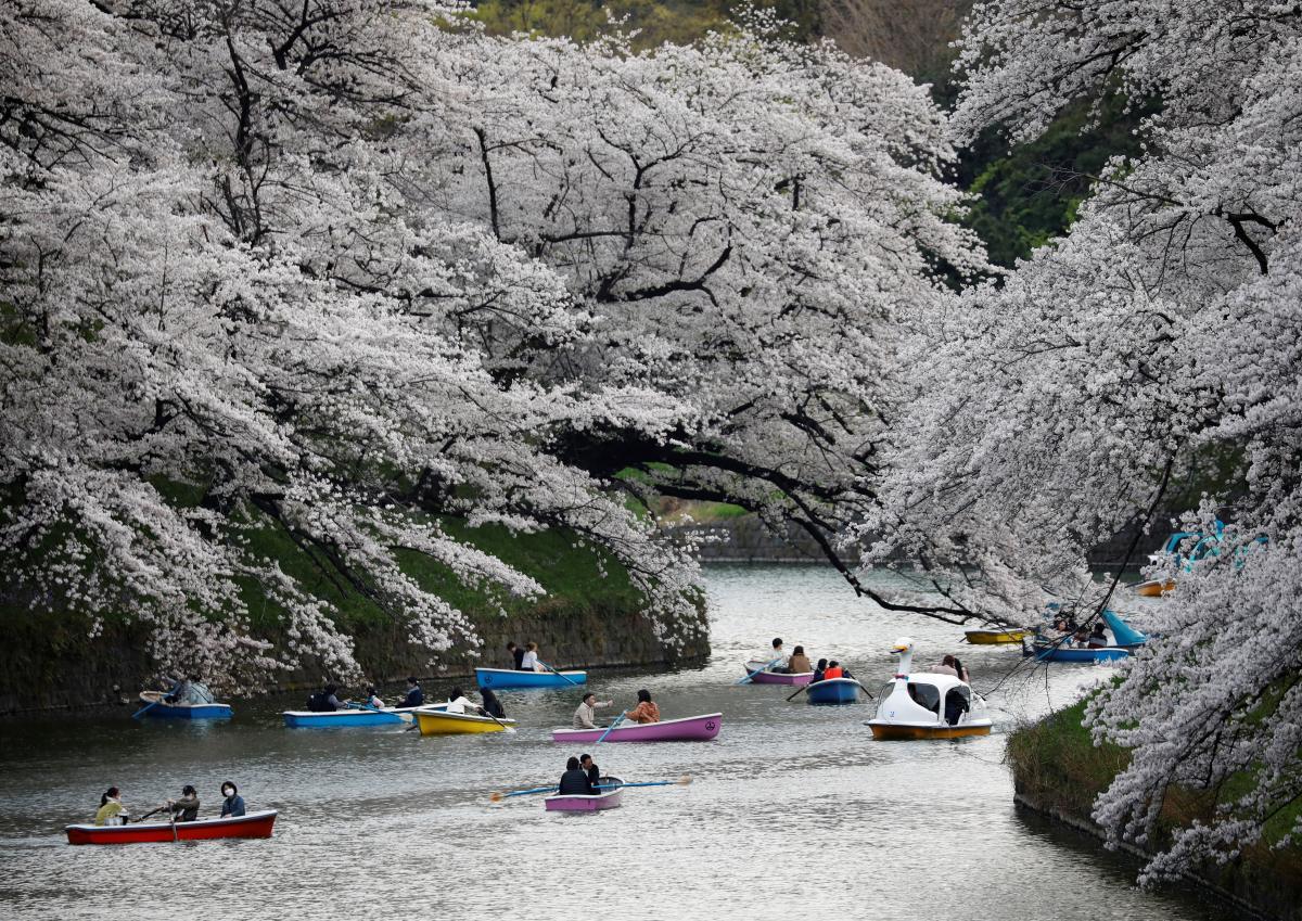 Сакура в Японии 2021