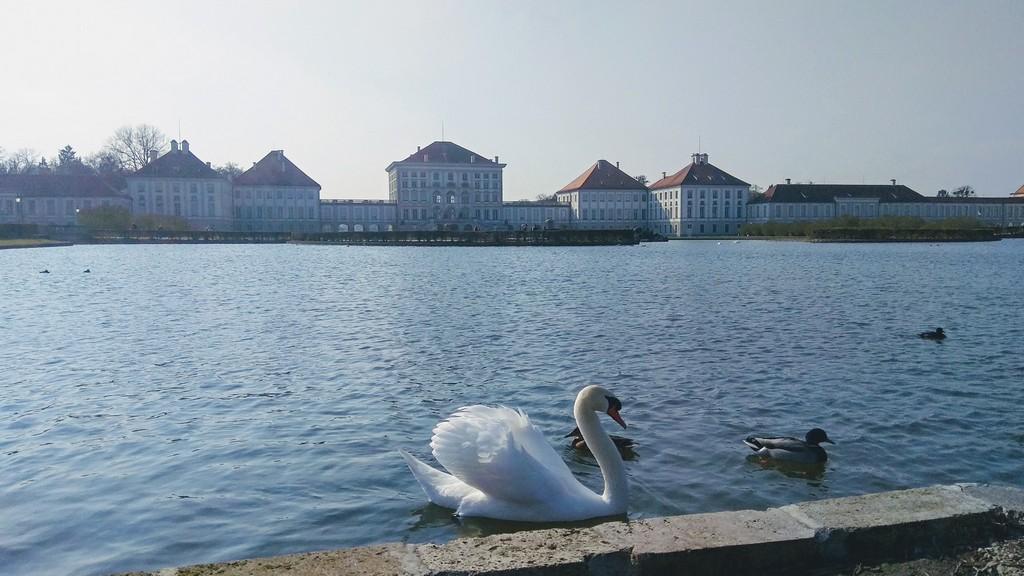 Лебеди в Нимфенбурге