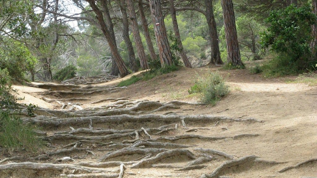 Тропа Ками-де-Ронда: Льорет-де-Мар – Бланес