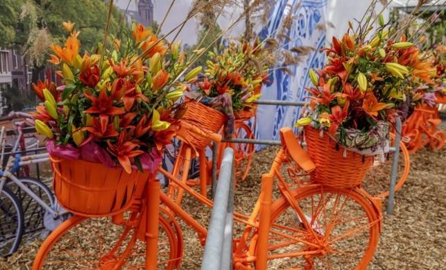 Сад луковиц и велосипедов - место для селфи