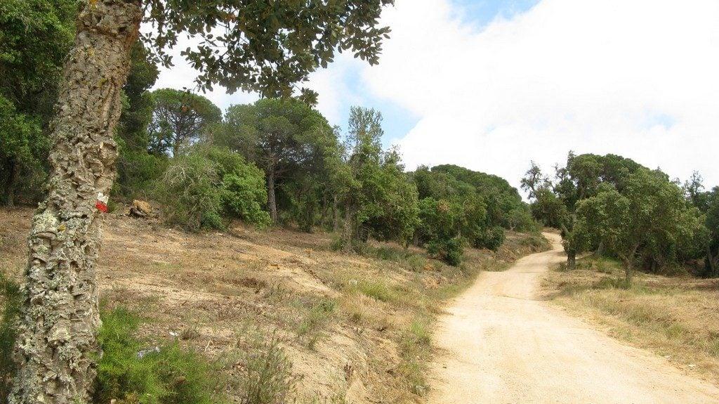 Тропинка через оливковую рощу (с бело-красным флажком на дереве), Ками-де-Ронда